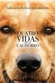 Photo of Quatro Vidas de um Cachorro   Sinopse – Trailer – Elenco