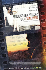 Photo of A Bruta Flor do Querer | Sinopse – Trailer – Elenco