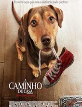 Photo of A Caminho de Casa   Sinopse – Trailer – Elenco